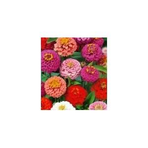 http://www.oleander.pl/1082-2121-thickbox/cynia-liliput-zinna-elegans-nasiona.jpg