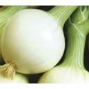 Cebula Białˆa drobna wczesna (Allium Cepa) nasiona
