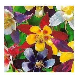 http://www.oleander.pl/1109-2227-thickbox/orlik-aquilegia-vulgaris-nasiona.jpg