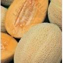 Melon Melba nasiona