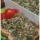 kiełki brokułu