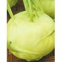 Kalarepa (Brassica oleracea) nasiona