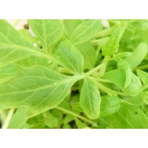 http://www.oleander.pl/1391-2516-thickbox/sadzonki-pomidora-malinowego-10-szt.jpg