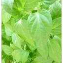Papryka słodka 5 sadzonek
