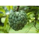 Jabłko Cukrowe (Annona Squamosa) nasiona