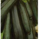 Dynia Zwyczajna (Cukinia Soraya) nasiona