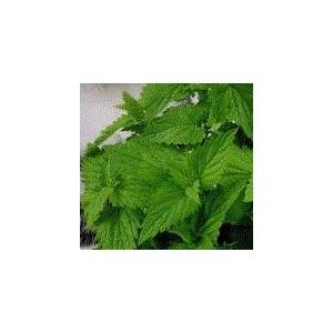 http://www.oleander.pl/521-1506-thickbox/kocimietka-nepeta-cataria-nasiona.jpg