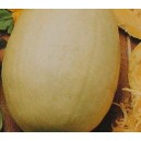 Dynia Makaronowa (Cucurbita Pepo) nasiona