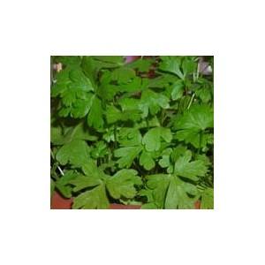 http://www.oleander.pl/579-1621-thickbox/pietruszka-naciowa-zwykla-nasiona.jpg