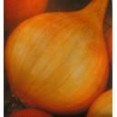 Cebula Sochaczewska (Allium Cepa) nasiona