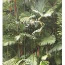 Palma Lakka (Cyrtostachys Lakka) nasiona