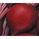 Burak ćwikłowy (Czerwona Kula) nasiona