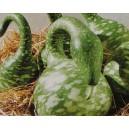 Tykwa Pospolita Kobra - Dynia (Lagenaria Siceraria) nasiona