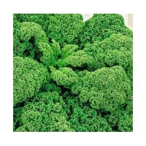 Jarmuż zielony nasiona