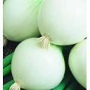 Cebula Biała (Allium Cepa) nasiona