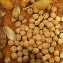 Ciecierzyca Pospolita (Cicer Arientum) nasiona