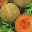 Melon Emir  (Cucumis Melo) nasiona