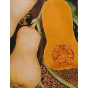 http://www.oleander.pl/932-1975-thickbox/dynia-pizmowa-cucurbita-moschata-nasiona.jpg