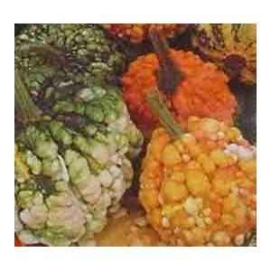Dynia Ozdobna Brodawkowa (Cucurbita Pepo) nasiona