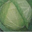 Kapusta włoska (Brassica Oleracea) nasiona