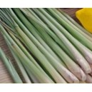 Trawa cytrynowa (Cymbopogon obtectusa) nasiona