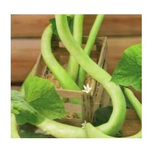 Dynia - Tykwa Snake (Langenaria Siciraria) nasiona