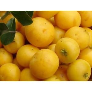 Dovyalis caffra - jabłko z australii 3 nasiona