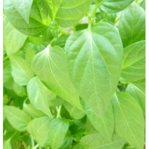 https://www.oleander.pl/1394-2519-thickbox/papryka-slodka-5-sadzonek.jpg