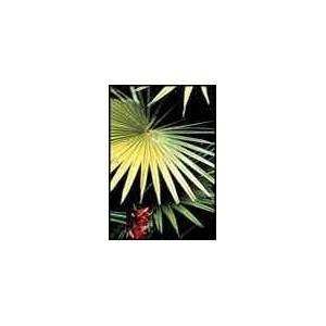 Palma Livinstonea Chinensis 3 nasiona