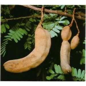 Tamarynd (Tamarindus Indica) nasiona 5