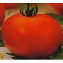 Pomidor Gruntowy wysoki (Krakus) nasiona