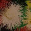 Aster Chiński wysoki igiełkowy (Callistephus Chinensis) nasiona