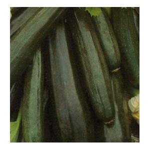 Dynia Zwyczajna (Cukinia Soraya/Astra Polka) nasiona