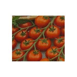 Pomidor Gruntowy (typ Cherry / Koralik) nasiona