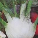 Koper włoski Fenkuł (Foeniculum Vulgare) nasiona