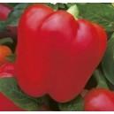 Papryka Czerwona (Capsicum Annuum) nasiona