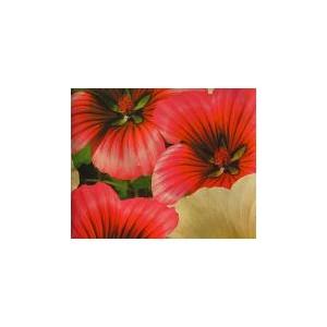Malope (Trifida) nasiona