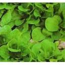 Roszponka (Valerianella Locusta) nasiona