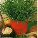 Rozmaryn (Rosmarinus Officinalis) nasiona