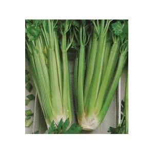Seler naciowy (Apium Graveolens) nasiona